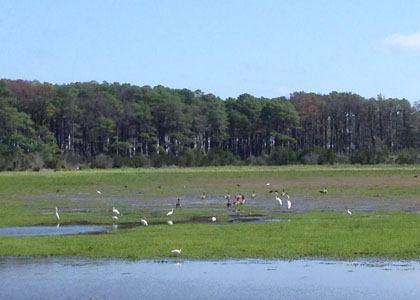 chincoteague_2